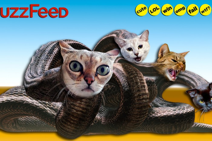 Buzzfeed-tetes-chatons-hydre