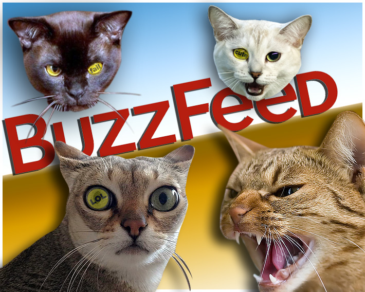 Mad Cats Buzzfeed